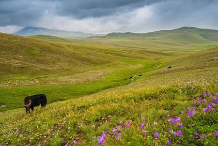 Deosai Plains in summer   © Moiz Ismaili/WikiCommons