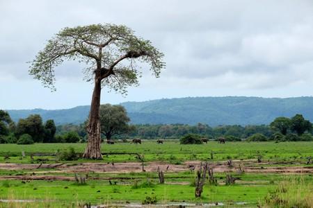 Elephants at  Lower Zambezi National Park | © Lars Plougmann / Flickr