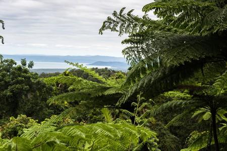 Within the Daintree Rainforest |© Bryan Ungard / Flickr