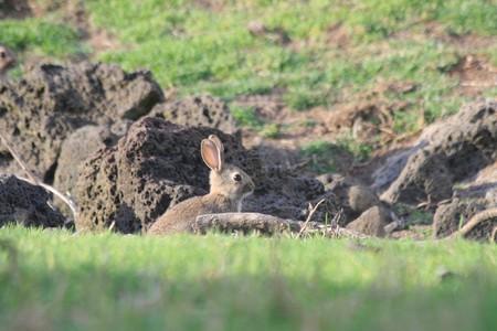 Rabbit in Ambury Park, Auckland, New Zealand | © russellstreet/Flickr