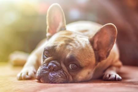 Dog ©lightstargod/Pixabay