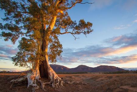 Ikara-Flinders Ranges National Park | © Jacqui Barker/Wikimedia Commons