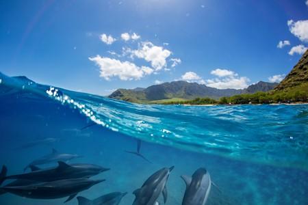 Island life | © Willyam Bradberry/Shutterstock