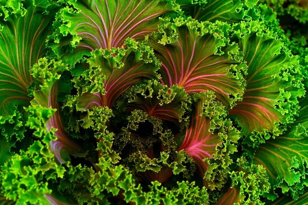 Beautiful green and pink curly kale   © Pixabay/Free Photos