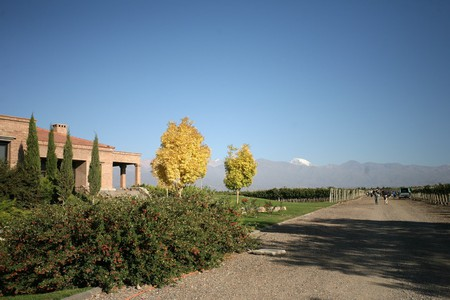 A vineyard in Mendoza, a great place for a date
