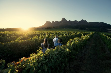 Walking through Cape vineyards at sunset | © South African Tourism