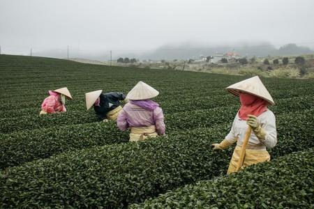 A day at the Moc Chau Tea Plantations |