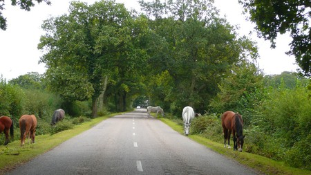 New Forest Ponies|©Herry Lawford/Flickr