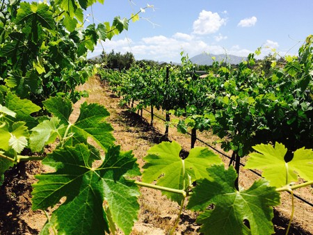 The Bernardo Winery is San Diego's oldest vineyard and winery