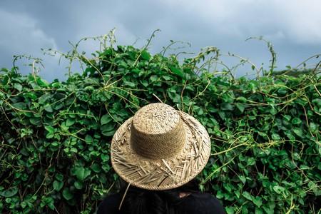 Bandung, a highland with thriving plantation