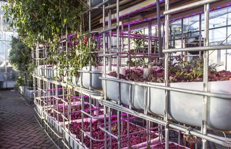 Aquaponic systems inside Mediamatic's greenhouse
