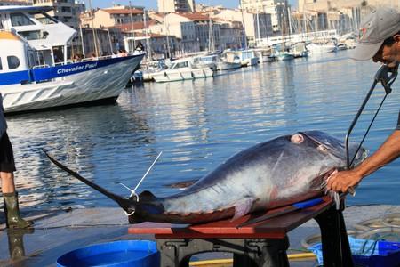 Saw & ebonite tuna