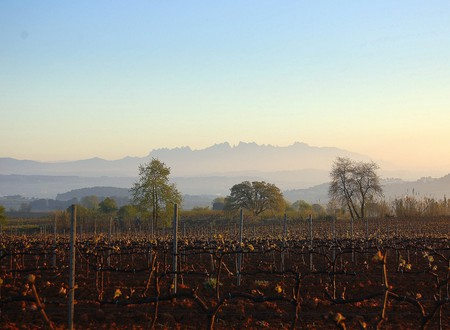 The Penedès wine region © Angela Llop