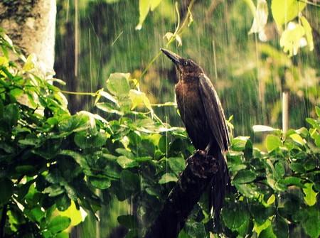 A bird in the rain in Yucatán state