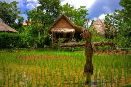 Verdant rice farm in Thailand   © Aziz J.Hayat / Flickr