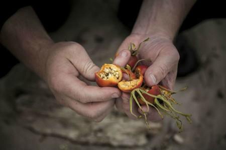 Daniel Berlin grows the food he serves