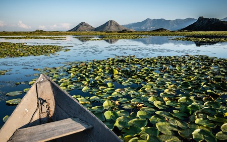 Wooden boat in the water lilies on Skadar lake