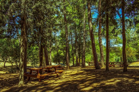 Pause for a picnic under a green canopy