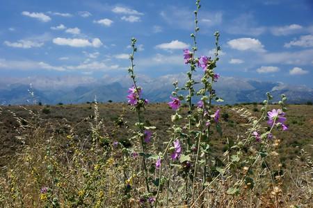 Beautiful wildflowers in Crete
