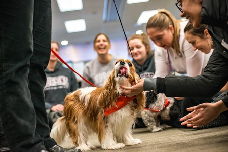 A therapy dog is lavished with attention