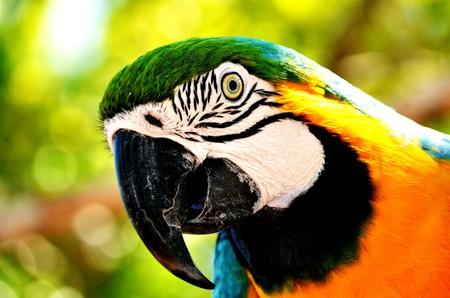 Birdlife in Bolivia