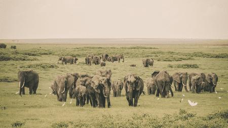 A herd of elephants in Kenya's Amboseli National Park