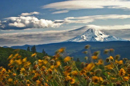 Mount Hood towering into the sky