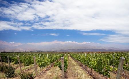 A beautiful vineyard in Mendoza, Argentina