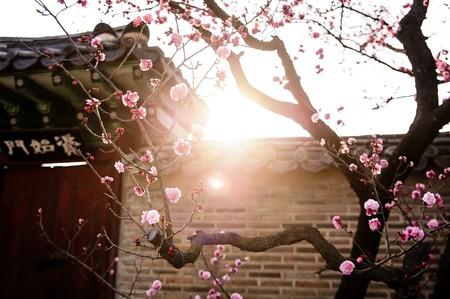 South Korea springs to life