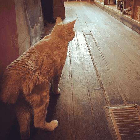 Stubbs | © Stubbsmayorcat / Instagram