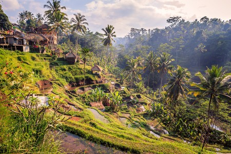 Rice terrace in Ubud, Bali, Indonesia