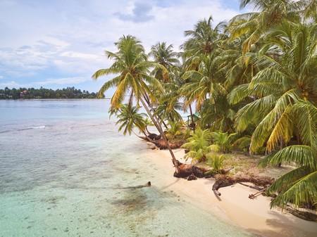 Palms on caribbean beach in Nicaragua