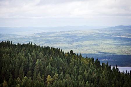 Värmland's forests stretch on forever