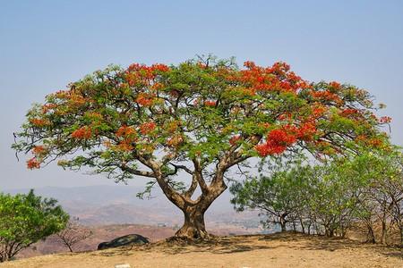 A Tree in Majete Wildlife Reserve, Blantyre