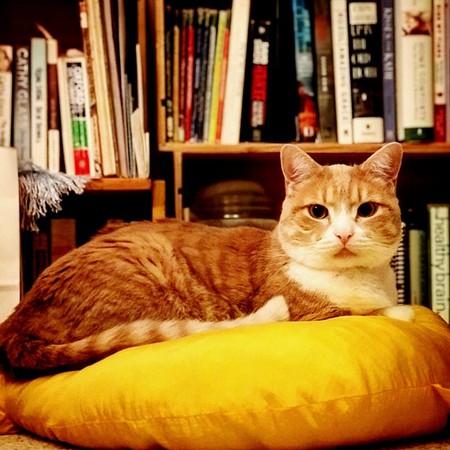 Books │© Leif Kurth / flickr