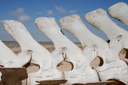 Bones outside the CEDO, Puerto Peñasco
