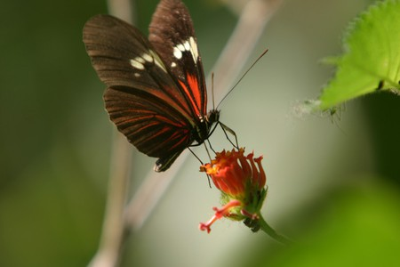 A butterfly seen at Parque Nacional Madidi