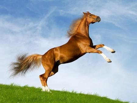 Chovgan uses strong Karabkh horses