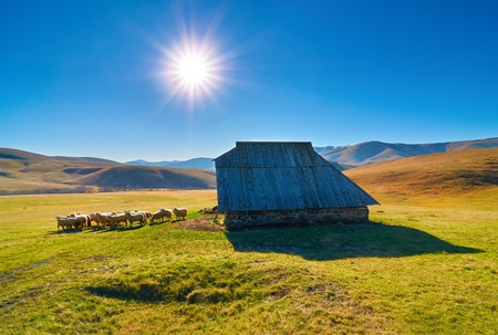 A herd of sheep in front of the sheep house in middle of mountain pasture in Zlatibor, Serbija