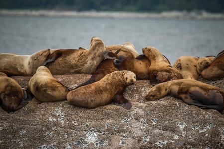 You might be lucky enough to spot sea lions on Isla del Farallón