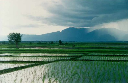 Uul-Rice-Fields-in-Central-Laos