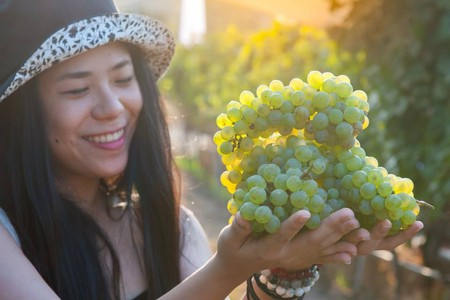 Thai vineyards are on the rise