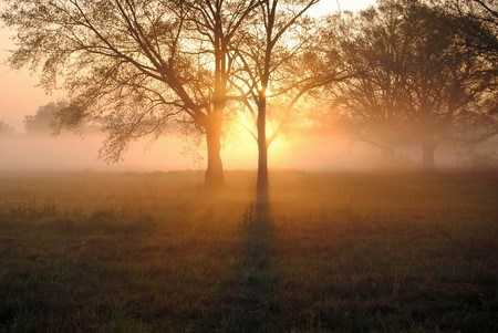 Early Mississippi morning