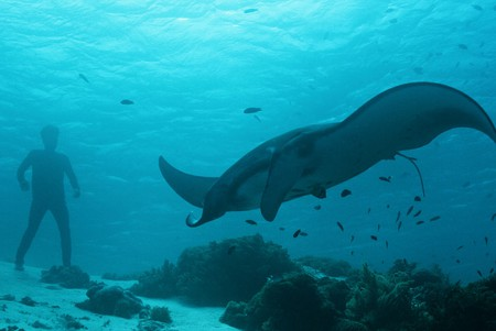 A giant manta ray was one of the incredible sights they captured