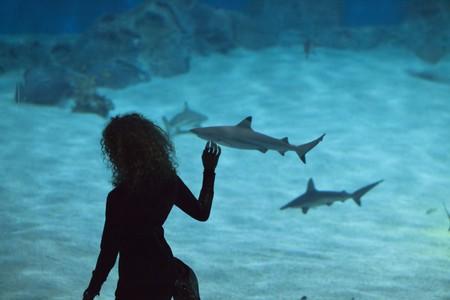 Den Blå Planet is Northern Europe's largest aquarium
