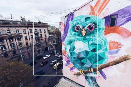 Azure owl