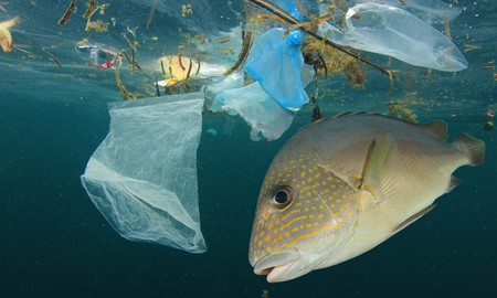 Plastic pollution is our oceans is a growing problem