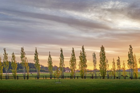 The stretching paddocks in Bowral