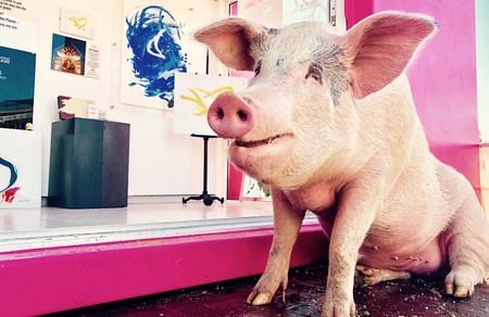 Pigcasso, the world's most famous, if not only, painting pig
