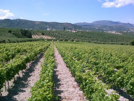 Karavitakis Winery, Pontikiana, Crete